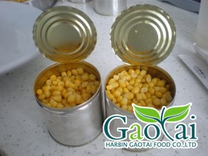 Canned sweet corn kernels in brine